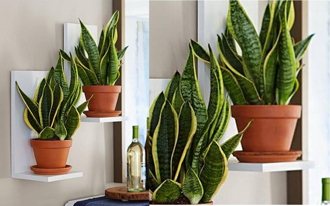 2-espada-de-sao-jorge-plantas-ambientes-fechados-apartamento-show