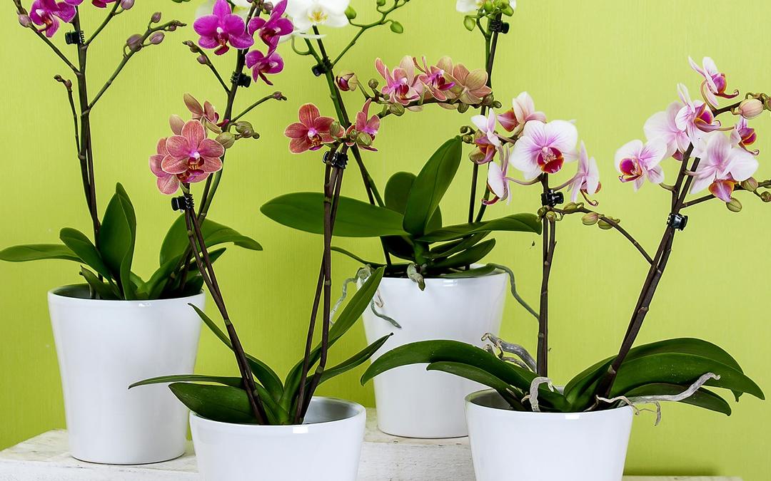 5-orquideas-plantas-ambientes-fechados-apartamento-show