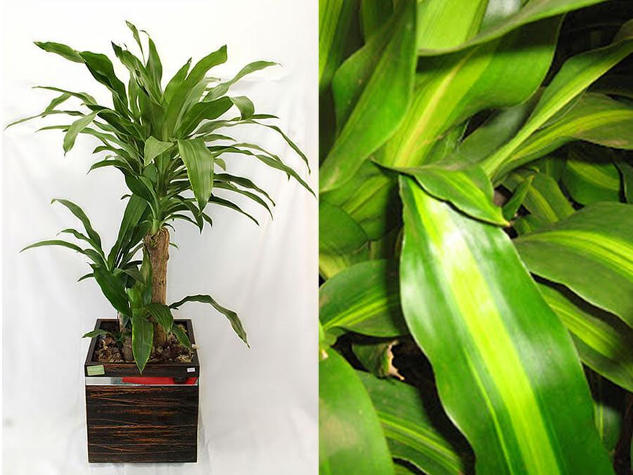 7-pau-dagua-plantas-ambientes-fechados-apartamento-show