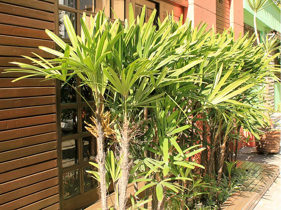 8-rafis-plantas-ambientes-fechados-apartamento-show